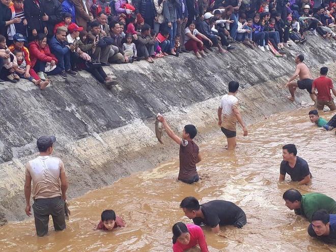 hàng trăm người nhảy xuống bắt nửa tấn cá dưới hồ
