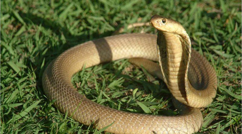 Trong giấc mơ thấy rắn là điềm báo điều gì?