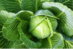 Dấu hiệu cơ thể đang thiếu rau xanh trầm trọng