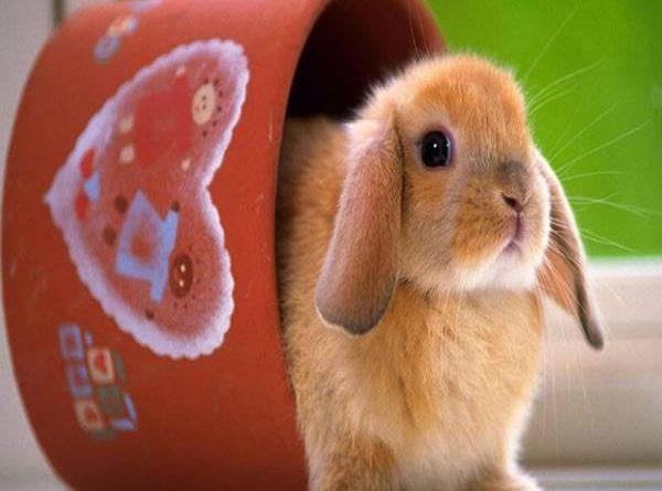 Mơ thấy thỏ đánh lô đề con gì và điềm báo gì?