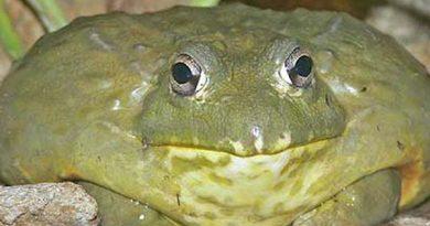 Nằm mơ thấy ếch thường báo hiệu trước điều gì