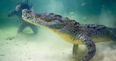 Giải mã bí ẩn giấc mơ thấy cá sấu đánh con gì