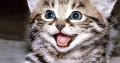 Ngủ mơ thấy con mèo là điềm báo hung hay cát ?